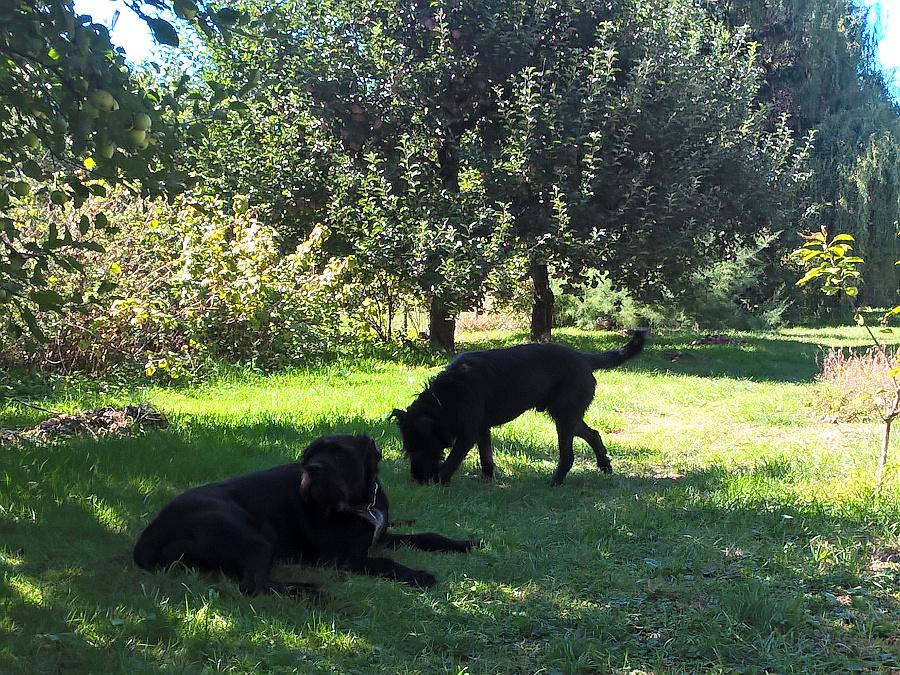 Cooper a Ilča