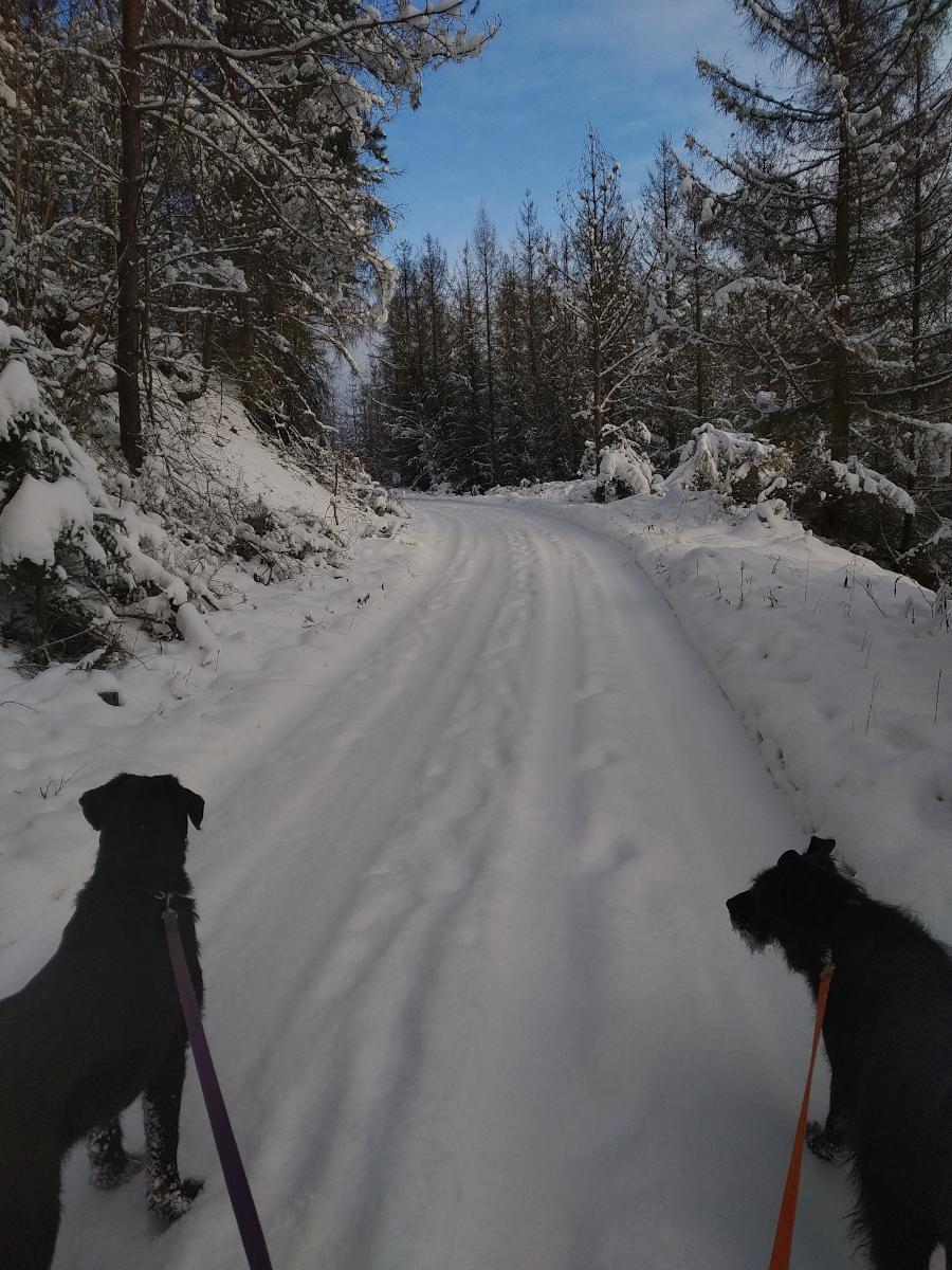 Zima_2021
